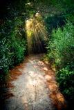 Chemin magique Image libre de droits