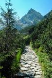 Chemin menant à la montagne de Koscielec Image stock