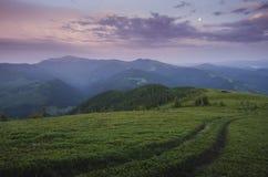 Chemin menant aux montagnes photos libres de droits
