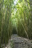 Chemin merveilleux à travers les arbres en bambou grands, Maui, Hawaï image libre de droits