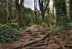 Chemin mystérieux en bois Image stock