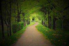 Chemin mystique à travers une forêt foncée avec le projecteur photo stock