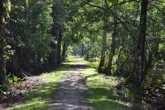 Chemin ombragé à la colonie de freux d'oiseau Photographie stock libre de droits