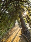 Chemin paisible en parc d'extérieur Photos stock
