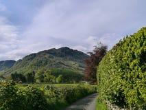 Chemin par des buissons avec la montagne en avant Photographie stock libre de droits