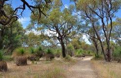 Chemin parmi les arbres de Yakka Photographie stock libre de droits