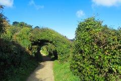 Chemin parmi les buissons verts photo libre de droits
