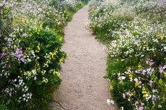 Chemin parmi les fleurs Photographie stock libre de droits