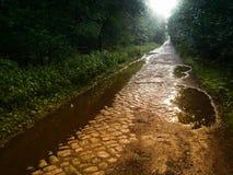 Chemin pavé par forêt images stock