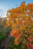 Chemin pendant l'automne image stock