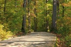 Chemin piétonnier à travers la forêt Images libres de droits