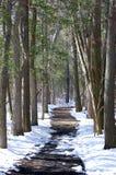 Chemin rayé par arbre Photos libres de droits