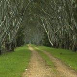 Chemin rayé par arbre images libres de droits