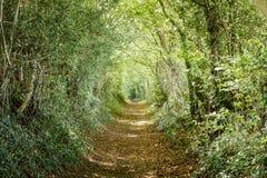 Chemin rayé par arbre Photographie stock libre de droits
