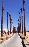 Chemin rayé par arbre tropical Image libre de droits