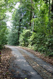 Chemin rayé par arbre Photo stock