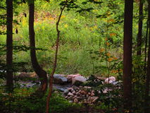 Chemin rocheux Photo stock