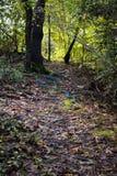 Chemin rugueux dans les arbres images stock