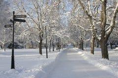 Chemin scandinave avec des arbres pleins de la neige images stock