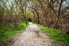 Chemin sec menant par des arbres pendant la sécheresse Image stock