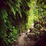 Chemin secret Image stock