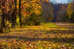 Chemin Sunlit Photographie stock libre de droits