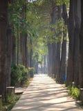 Chemin Sunlit en stationnement Photographie stock libre de droits