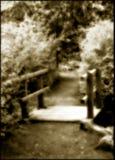 Chemin surréaliste de régfion boisée Photographie stock