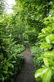 Chemin tranquille de région boisée Photographie stock libre de droits