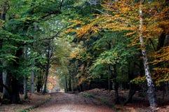 Chemin à travers des arbres d'automne dans la forêt neuve Photos stock