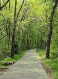 Chemin ? travers les bois photo libre de droits