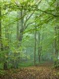 Chemin traversant la forêt automnale brumeuse images libres de droits