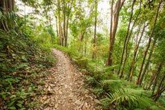 Chemin tropical paisible de montagne de forêt au coucher du soleil Sentier de randonnée i Photo libre de droits