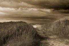 Chemin vers la mer Images libres de droits