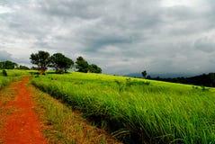 Chemin vers la prairie dans Khao Yai Image libre de droits