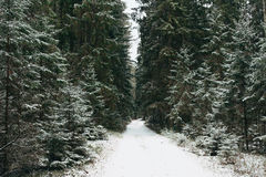 Chemin vers le lac Photos stock