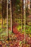 Chemin vibrant luxuriant de régions boisées pendant l'automne image libre de droits