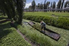 chemine le xochimilco photos stock