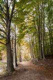 Chemins dans la forêt ; Montseny images stock