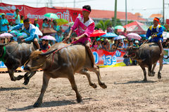 Chemins de Buffalo de Chonburi Photos libres de droits