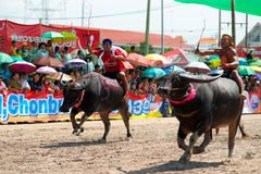 Chemins de Buffalo de Chonburi Photo stock