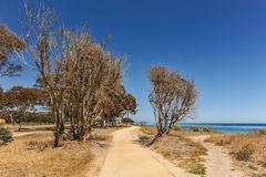 Chemins de saleté par l'océan pacifique avec des arbres Photos stock