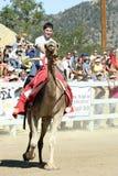 Chemins internationaux de chameau dans la ville de la Virginie, nanovolt, USA Image libre de droits