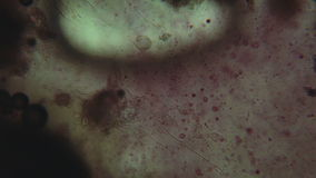 Chemische reacties onder microscoop stock video