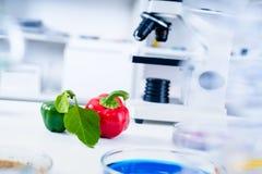 Chemisches Labor der Nahrungszufuhr Lebensmittel im Labor, DNA ändern GMO änderte genetisch Nahrung im Labor stockbilder
