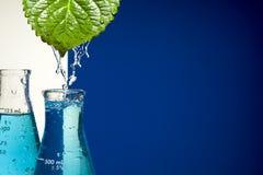 Chemisches Reagenzglas und Blatt Lizenzfreies Stockbild
