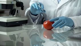 Chemist making experiment with tomato sample, dangerous supplements injection. Stock photo royalty free stock photo