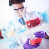 Chemist searching for the right solution. Royalty Free Stock Photos