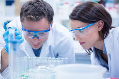 Chemist team working with pipette and test tube Royalty Free Stock Photography