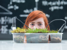 Chemistry lab grass experiment Royalty Free Stock Image